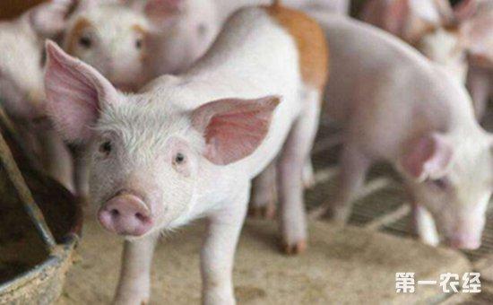 青海将提升生猪生产管理水平 确保养猪产业发展