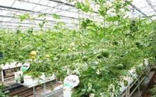<b>这些颠覆性的农业科技,正在改变着中国农业!</b>