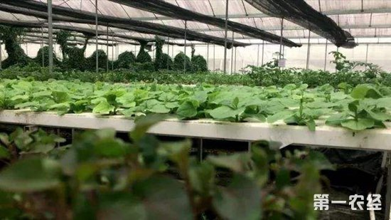 这些颠覆性的农业科技,正在改变着中国农业!