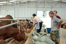 贵州平塘:六寨村生态畜牧养殖 鼓了农民的钱袋子