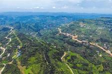 """我国与56个国家进行林业合作 开展""""一带一路""""增绿行动"""
