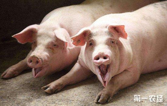 给猪驱虫时常用的药物有哪些?猪驱虫的注意事项