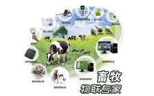 畜牧业信息化势在必行 大数据平台搭建指日可待