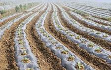 农膜有哪些用途?为什么废旧农膜要回收呢?
