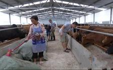 贵州甲茶镇六寨村:生态畜牧养殖园区打造全产业链