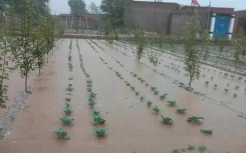 四川黄淮一带强降雨致5人死亡10人失踪