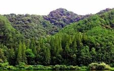 福建:中国植被覆盖率最高的省份 生态旅游独具特色