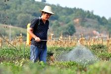 茶农们注意啦,8月1日起这3种农药不能用啦