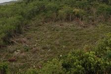 天然林被破坏严重 修复之路困难重重