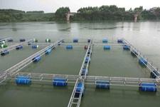 重庆地区的水产养殖户注意啦,8月份这些水产养殖病害不可不防