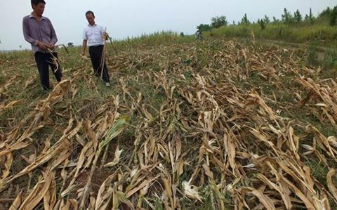 湖北:高温少雨致多地干旱 农作物受灾面积68.5千公顷