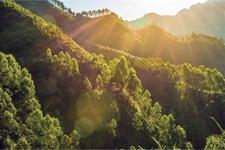 2019年上半年广西林业经济增长超目标完成