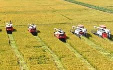 四川泸州:立石镇近千亩制种水稻开镰收割