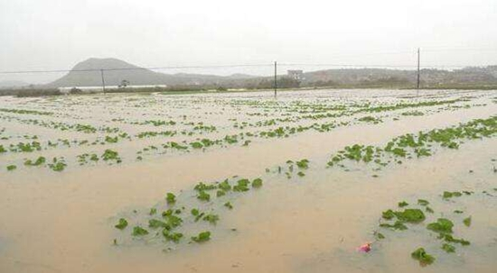 湖南衡阳:强降雨致蔬菜基地受灾严重 农业局15万农资助力灾后恢复生产