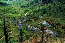 云南保山:争当生态文明建设排头兵 农民人均林业收入超4500元