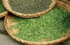 武陵云霜是什么茶?这种茶有哪些功效?