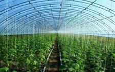 有机肥替代化肥 农民种蔬菜一年增收20万元
