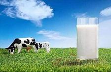 振兴奶业培育竞争优势 中国乳业频获政策支持