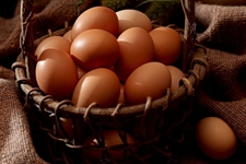 鸡蛋、毛鸡行情一片大好 价格狂涨不止