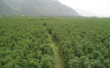 山西太行林局开展行政执法检查和种苗质量抽查工作