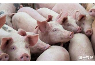 在往后的几年里养殖猪即将进入自繁自养利润率已可高达100%