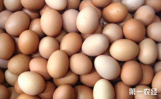 鸡蛋整体价格走高 预计9月份或将回落