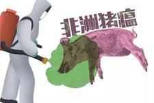 <b>东欧非洲猪瘟肆虐 保加利亚宰杀13万头猪</b>
