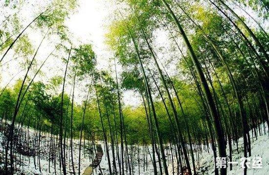 安徽省实现林长责任制 设置5万多处林长责任区