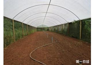 我国山东省菏泽市太空大棚蔬菜撑起一条扶贫产业链