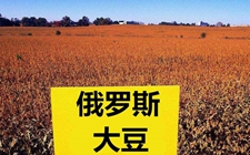 <b>中俄加强农业合作 俄罗斯大豆大量出口中国</b>