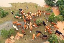 黑龙江鸡西:农户擅自返家喂猪放牛 遭洪水围困获救后被拘3日