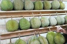 泰国对华出口水果同比增长152% 越南比起去年同期下降明显