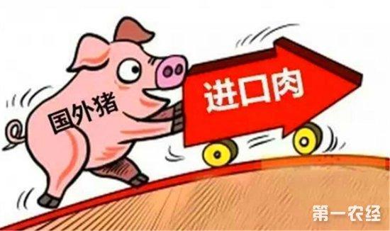 我国养猪业遭重击 欧盟对华猪肉出口同比增长41%