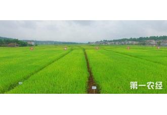 农作物病虫害绿色防控在贵州