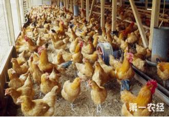 养鸡场的鸡粪要怎么去处理