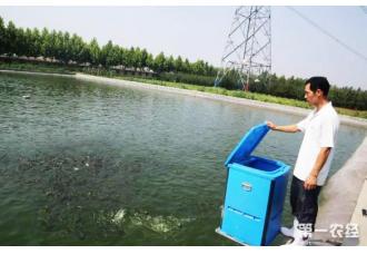 沼气水居然还能养鱼 你有听说过吗?