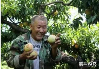 九月如何管理桃树 要准备哪一些工作