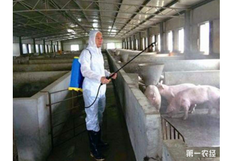 猪场疫病怎么防疫?做好以下几点