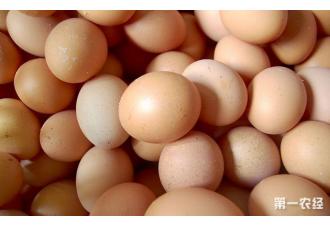 中秋节过后,鸡蛋价将开始回落