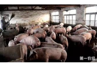48头猪卖了多少钱?卖家卖的心惊肉跳!
