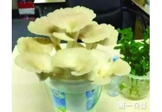 自家种蘑菇 营养又健康
