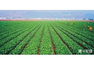 今年的9月份种植什么蔬菜盈利好