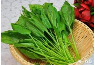 九月份种植菠菜的几个技巧