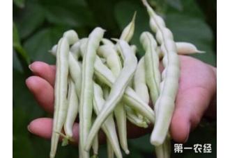 想要豆角高产可以试着用着这一些肥料