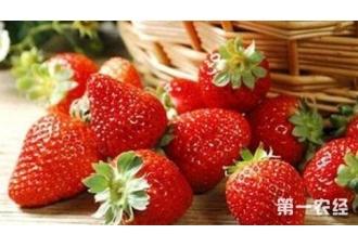 草莓在秋季的管理几个要点