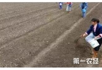 药材的种植对土壤有没有影响