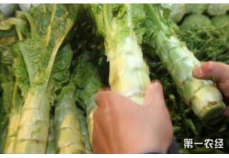 菜农想要种出优质莴笋就要注意的几个事项