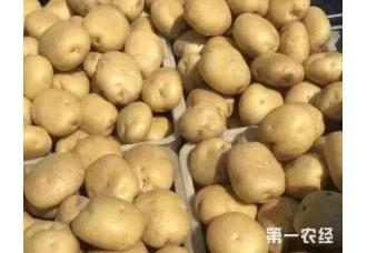 马铃薯在秋季的种植要做好哪几方面