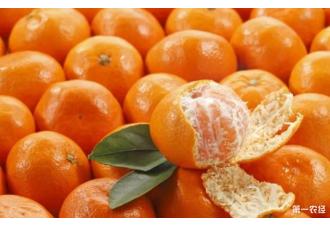 吃橘子需要注意哪些事项