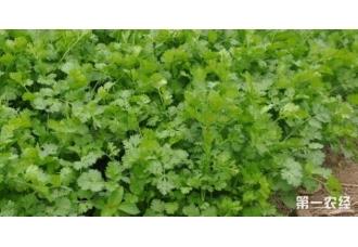 九月适合种什么蔬菜 该如何去种植